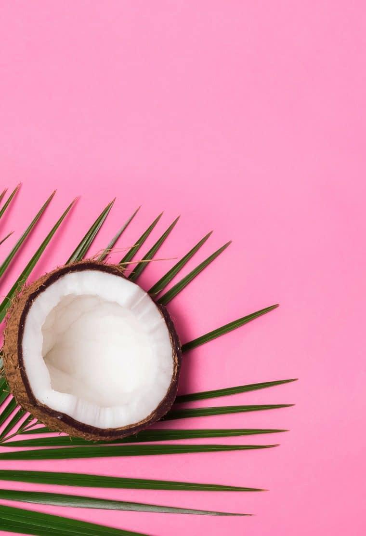 Noix de coco, feuille palmier, vacances.