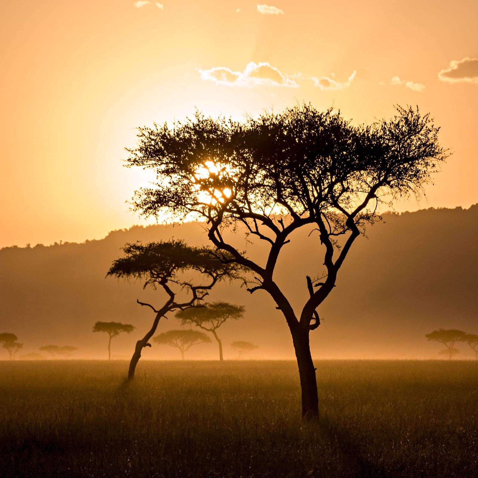 Brousse africaine, couché de soleil sur la savane.